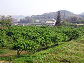 2011西湖柚花季:IMG_7016.JPG
