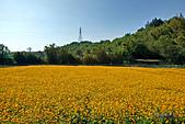 2014西湖甘藷農業之旅與白柚品嘗活動:IMG20141121111548.jpg