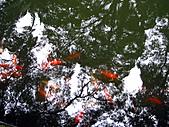 兩蔣文化園區─慈湖:IMG_6749.JPG