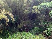 2011西湖柚花季:IMG_7045.JPG