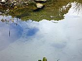 南庄護魚步道:IMG_4781.JPG