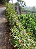 2011西湖柚花季:IMG_7046.JPG