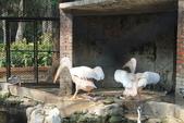 新竹市立動物園:251868597_x.jpg