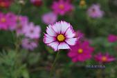 西湖花海:IMG_7579.JPG