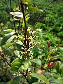 2011西湖柚花季:IMG_7048.JPG