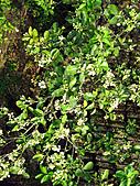 2011西湖柚花季:IMG_7020.JPG
