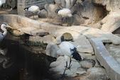 新竹市立動物園:251868624_x.jpg