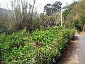 2011西湖柚花季:IMG_7049.JPG