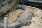 新竹市立動物園:251869465_x.jpg