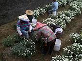 2012銅鑼杭菊與客家園區:DSC_5511.JPG