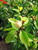 2011西湖柚花季:IMG_7050.JPG