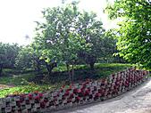 2011西湖柚花季:IMG_7110.JPG