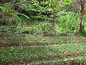 南庄桂花園:IMG_4850.JPG