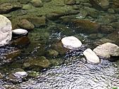 南庄護魚步道:IMG_4728.JPG