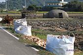 2014西湖甘藷農業之旅與白柚品嘗活動:IMG_7733.JPG