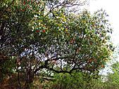 2011西湖柚花季:IMG_7052.JPG