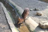新竹市立動物園:251868925_x.jpg