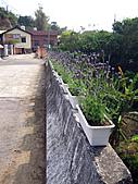 2011西湖柚花季:IMG_7024.JPG