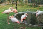 新竹市立動物園:251869654_x.jpg