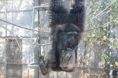 新竹市立動物園:251868959_x.jpg