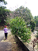 2011西湖柚花季:IMG_7053.JPG