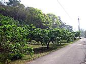 2011西湖柚花季:IMG_7026.JPG