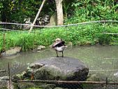 南庄桂花園:IMG_4851.JPG