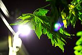 綠夜:IMG_7510