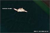 白帶魚大作戰:IMG_2437.jpg