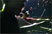 白帶魚大作戰:IMG_2443.jpg