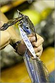 白帶魚大作戰:IMG_2516.jpg