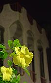 綠夜:IMG_7536