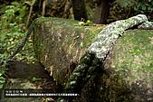 魚路古道賞秋芒:IMG_9045