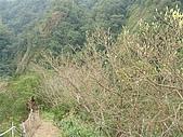 平溪孝子山:SANY0049