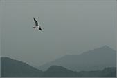 白帶魚大作戰:IMG_2362.jpg