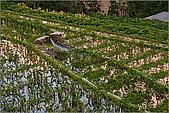 陽明山竹子湖:IMG_3448.jpg