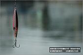 白帶魚大作戰:IMG_2366.jpg