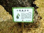 宜蘭縣---冬山鄉:仁山植物園台式庭園展示區8