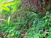 新竹縣---五峰鄉:麥巴萊古道1K版4