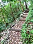 每年必會山岳之天上山:20140413賞桐步道天上山16