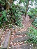 每年必會山岳之天上山:20140413賞桐步道天上山10