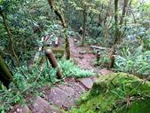 每年必會山岳之天上山:20140413賞桐步道天上山31