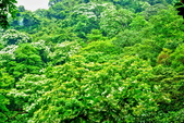 每年必會山岳之天上山:20140413賞桐步道天上山21