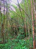 新竹縣---五峰鄉:麥巴萊古道1K版5