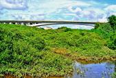 新竹縣---新豐鄉:紅毛港紅樹林保留區