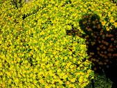 宜蘭縣---冬山鄉:仁山植物園英式花園展示區4