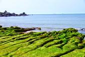 新北市---石門區:老梅綠藻礁27