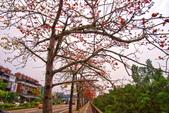 台中市---東勢區:2015東關路木棉花盛開4