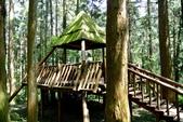 南投縣---鹿谷鄉:溪頭探索森林2