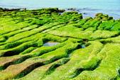 新北市---石門區:老梅綠藻礁14